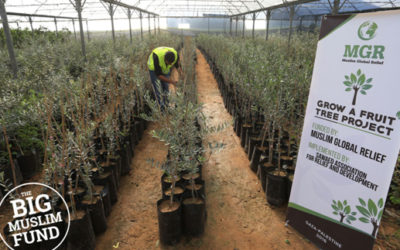 Giving Fruit Trees & Crops
