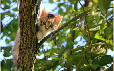 7 Things to Learn from the Prophet's Care for Animals